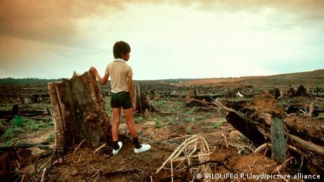 Seorang anak memandang hutan yang hancur