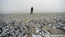 Weltspiegel 04.02.2021 | Chile Horcones, tote Fischer