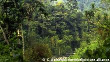 Uganda tropischer Bergregenwald