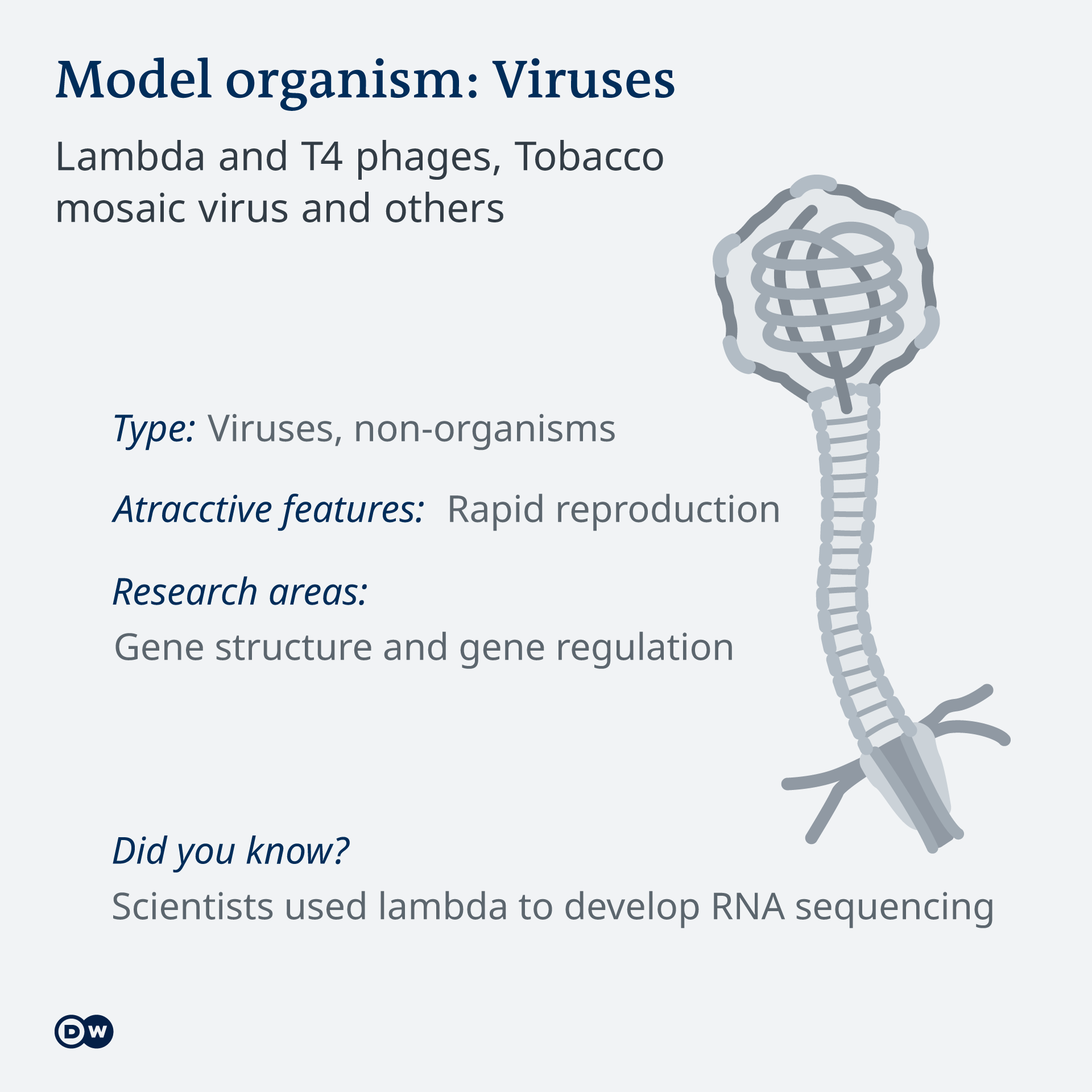 Infografik Model organism Bacteriophages EN