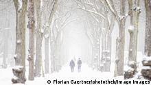 Deutschland Symbolbild Kältewelle | Allee in Berlin