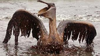 An oil-covered pelican is seen on the beach at East Grand Terre Island along the Louisiana coast