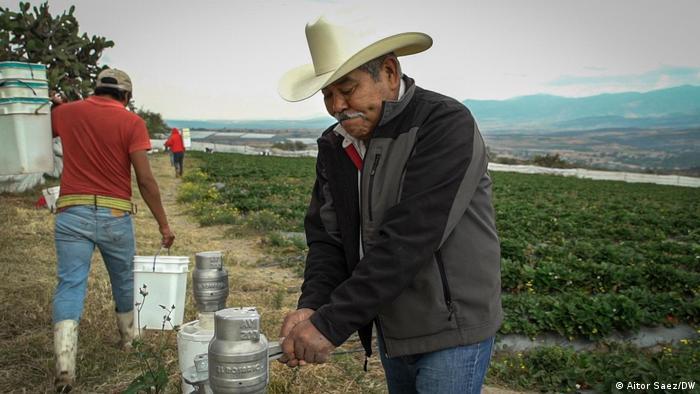 U Meksiku su uvereni: može se čak i jeftinije bez hemije