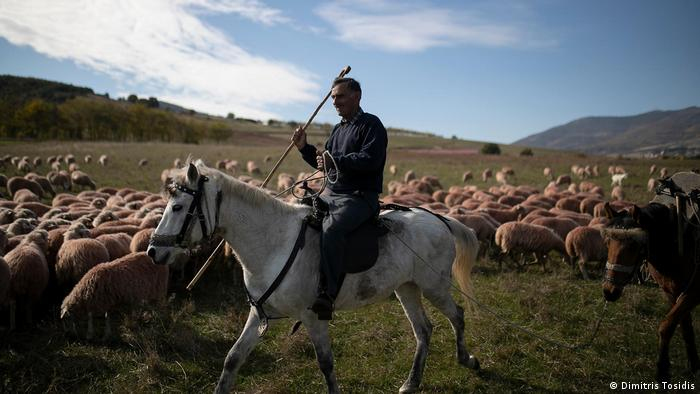 Thomas Ziagkas rides his horse in the middle of his herd migration to the winter destination in Greece