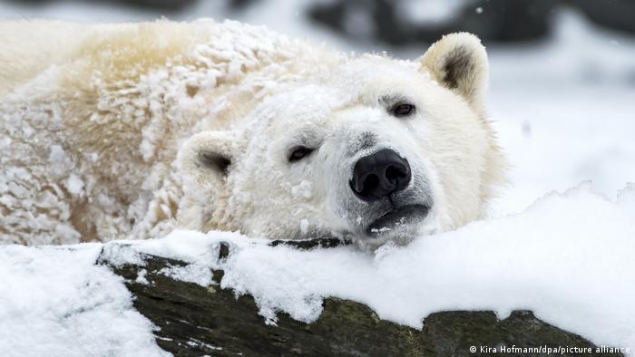 Белая медведица и Тоня