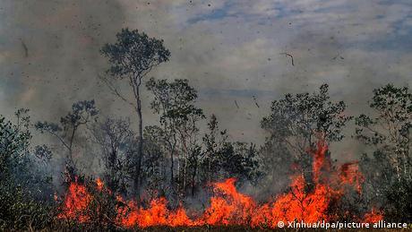 Incendio por tala indiscriminda en el Amazonas.