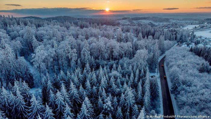 Snow-covered treetops in central Germany, near the city of Frankfurt