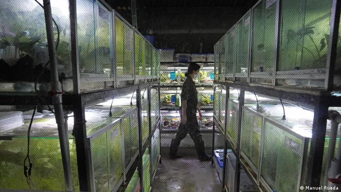 A Tesoros of Colombia employee walks through one of the company's breeding labs in Cundinamarca, Colombia.