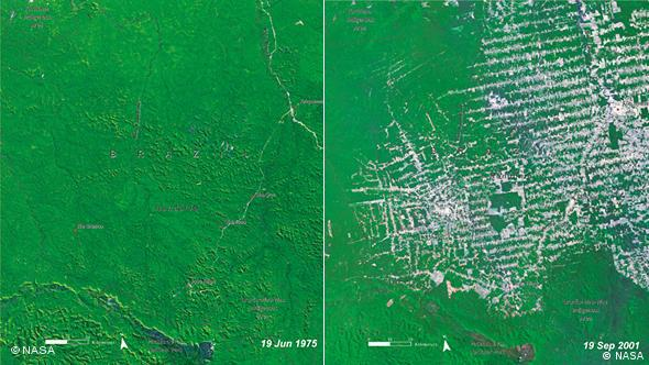 Comparative satellite images of the Brazilian rainforest
