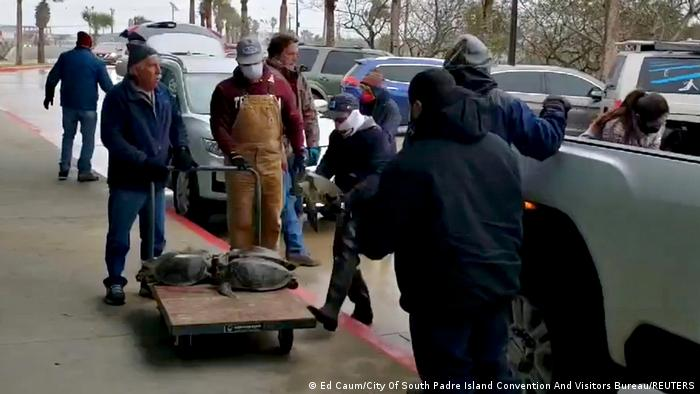 People place rescued turtles stunned by cold weather at an evacuation center