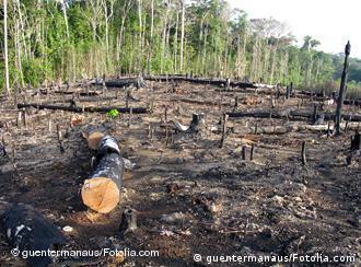 Ein Teil des Regenwaldes in Brasilien nach der Brandrodung (Foto: guentermanaus/Fotolia.com)
