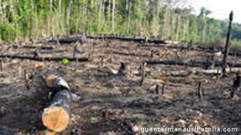 Slash-and-burn in the Amazon region of Brazil