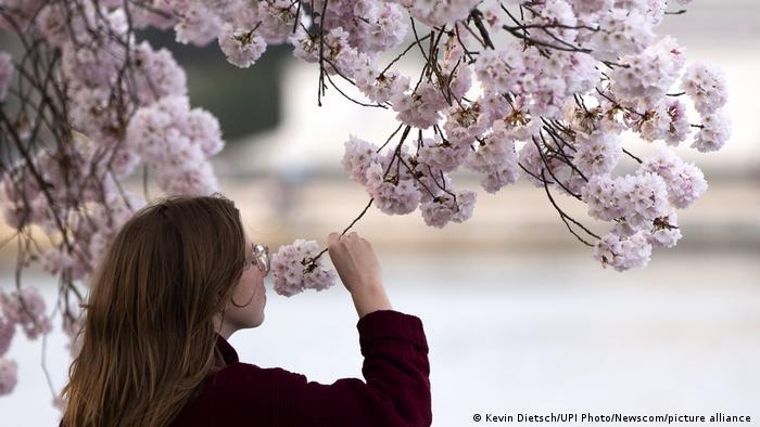 Mirisi proleća