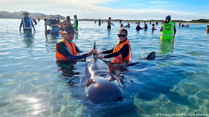 Neuseeland I Wale gestrandet