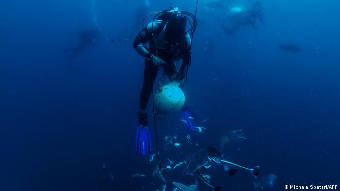 A diver shakes a sardines bait during a baited shark dive.