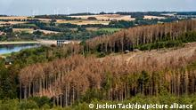 an image of destroyed trees in Germany