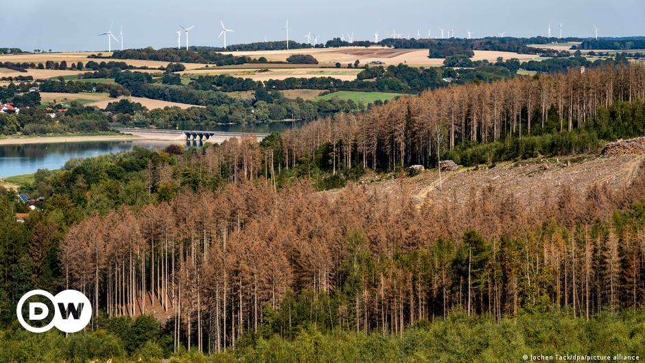 German forest decline hits record levels