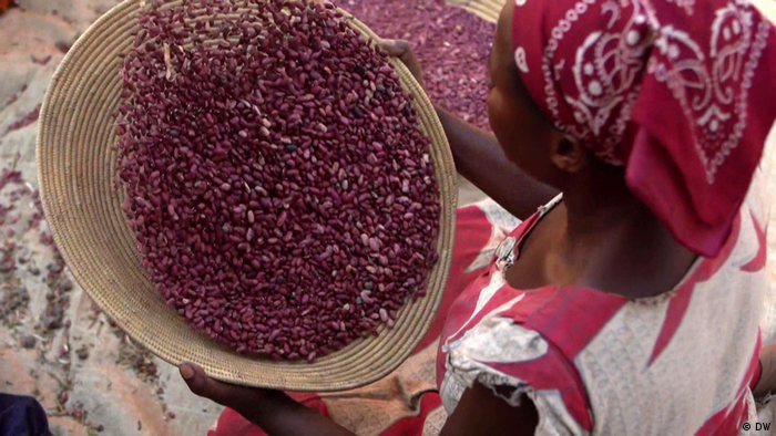 A woman sifts bean seeds in a basket
