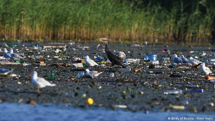 Stanište ptica na Modracu se svaki dan zagađuje
