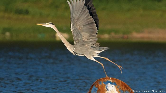 Birds of Bosnia - Almir Hukic
