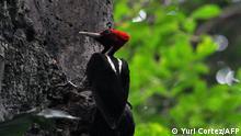 Costa Rica Naturpark