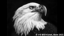 Adlerkopf von Andy Warhol - Ausstellung in der Kunsthalle Emden - Wild/Schön, das Tier in der Kunst