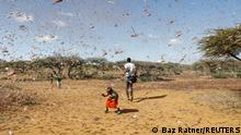 A child tries to chase away a swarm of desert locusts in Naiperere, near the town of Rumuruti, Kenya, January 30, 2021. REUTERS/Baz Ratner SEARCH RATNER LOCUSTS FOR THIS STORY. SEARCH WIDER IMAGE FOR ALL STORIES