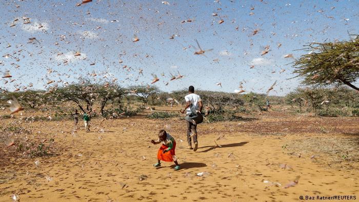 Homem e menino rodeados por gafanhotos no África