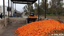 Spanien Sevilla   Recycling   Orangen