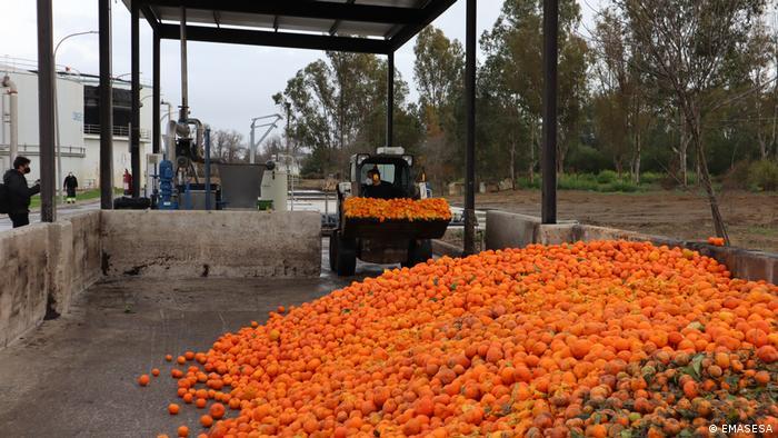Oranges from Seville