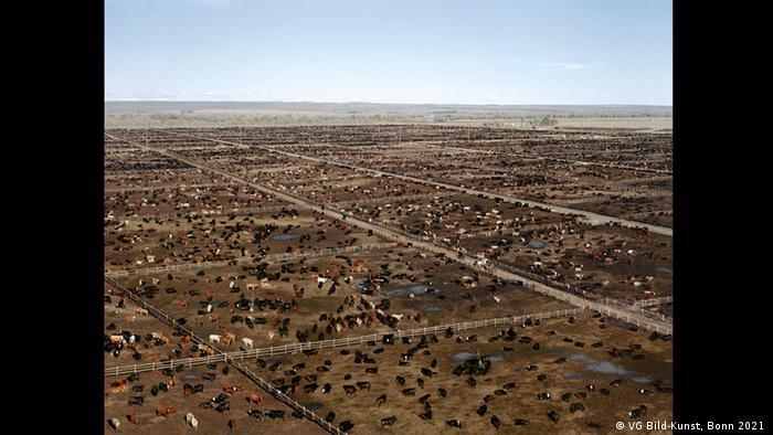 Andreas Gurskys Foto zeigt hunderte Kühe auf riesigen umzäunten Weiden