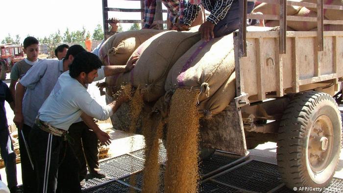 Syrien | Landwirtschaft | Dürre 2008