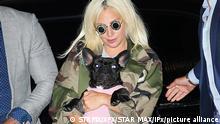Popsängerin Lady Gaga mit französischer Bulldogge