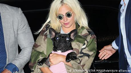 In this 2015 photo, Lady Gaga holds one of her dogs