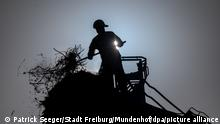 BdT | Freiburg - Feuerwehr muss Storchennest abbauen