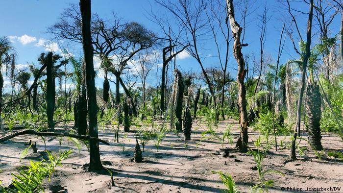 Trecho do Pantanal arrasado pelos incêndios de 2020