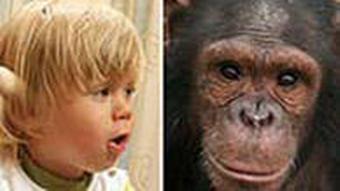 Links: Kopf eines blonden Kindes Rechts: Kopf eines Affen (Foto: MPI)
