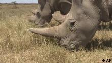 EcoAfrica Kenya Rhinos