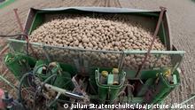Kartoffeln werden am 19.04.2013 auf ein Feld bei Huxahl im Landkreis Celle (Niedersachsen) ausgesäet. Foto: Julian Stratenschulte/dpa ++ +++ dpa-Bildfunk +++