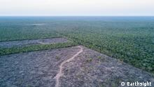 Paraguay, Illegale Entwaldung in Gran Chaco Illegal deforestation at a ranch inside PNCAT 2019