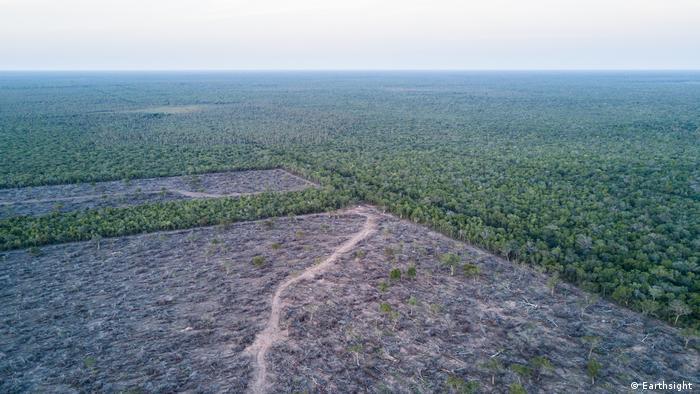 Tala ilegal por cultivos masivos en Paraguay.