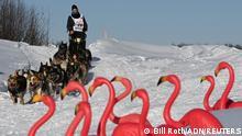 BdTD USA Hundeschlittenrennen Iditarod