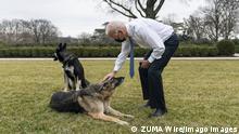 USA Präsident Joe Biden mit seinen Hunden Champ und Major