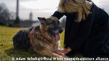 USA Wieder Hunde im Weißen Haus: Champ und Major