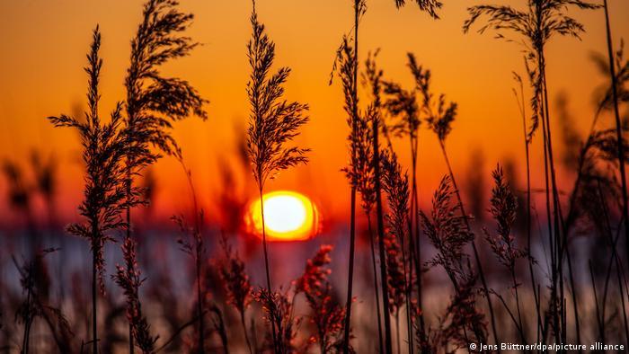 BdT   Sonnenuntergang auf Insel Rügen