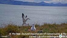 Neuseeland Landung Albatross | Taiaroa Head nature reserve
