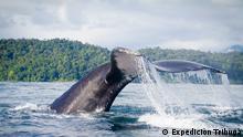 Foto simbólica de una cola de ballena que sale del agua.