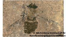Deutschland | Grube Messel |Fossilien-Lagerstätte