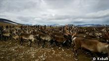Dokumentation Jagd am Polarkreis - Die Samen gegen den schwedischen Staat