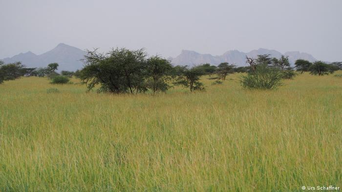 Healthy grassland in Afar, Ethiopia